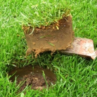Lawn Repair West Norwood