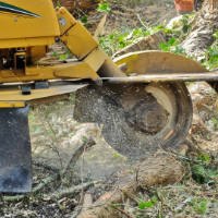 Stump Grinding West Norwood
